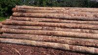 Southern Yellow Pine (SYP) Logs