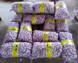 2015 Chinese Fresh Garlic Hot sale Normal White and Pure White