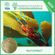 100% Natural Laminaria Japonica extract, Kombu Seaweed extract Fucoxanthin,brown algae powder