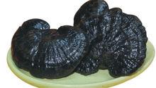 Ganoderma lucidum por fábrica confiable/de de extracto de ganoderma