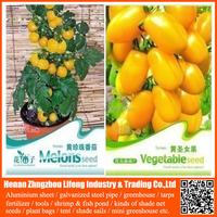 f1 high yield hybrid colorful cherry tomato seeds israel for sale