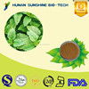 Favorable price of Lemon balm extract powder 5%-30% Rosmarinic acid