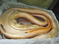 frozen gaint yellow conger eel export