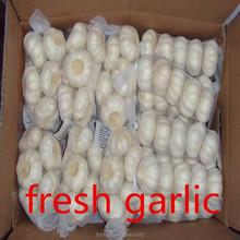 orginal source fresh garlic normal white 5cm for garlic paste in 20kg mesh bag FOB 620USD /MT karachi kelang thailand China