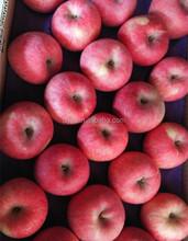 red fuji apple fresh fuji apple