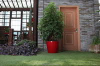 factory price like lechuza bonsai round plastic bonsai