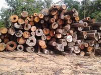 kayu banuas(hardwood)meranti,bengkirai,kayu kruing