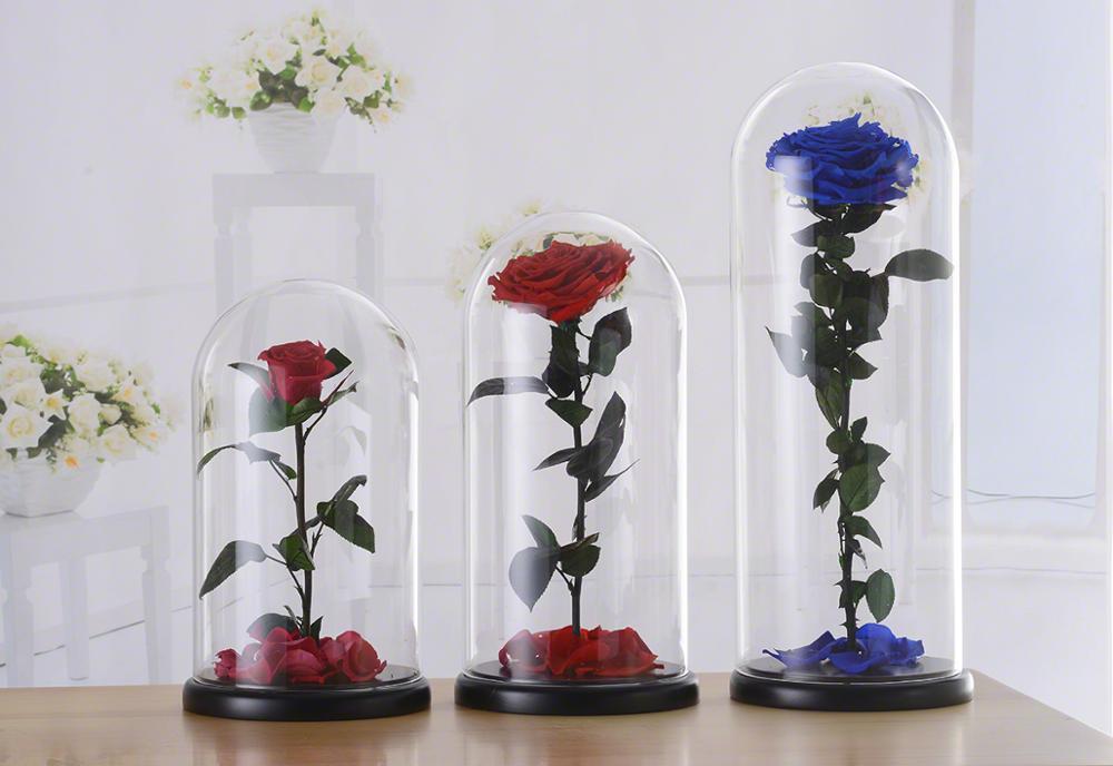 rose-in-glass-dome.jpg