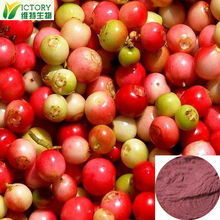 High quality ratio product cranberry extract uti