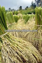 long grain white rice production