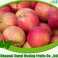 Bulk fresh green red qinguan apple from China