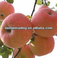 fresh apple fruit