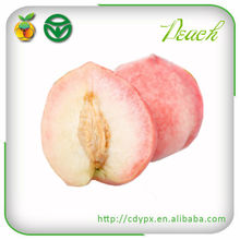 types of fresh peaches nectarine fruits wholesale