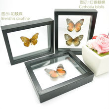 FOUSEN(039) Nature& Art natural species unique butterfly gifts
