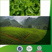 Natural & Pure favorable-price Gynura procumbens, organic calcium, new chlorogenic acid, green tea