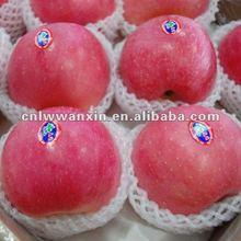 fuji apple exporter 2012 new crop