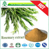 GMP Certificate hot sale best price 20%-60% rosemary oleoresin extract