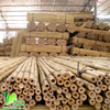 polished rattan cane bamboo cane
