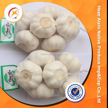 Shandong Pure White Fresh Garlic