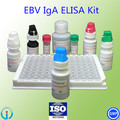 Inmunoensayo enzimático virus de Epstein - Barr VCA EBV IGA IGA Elisa Test Kit