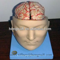 ISO 3D Brain Model , Medical Brain Model