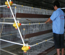 Taiyu poultry farm automatic chicken layer cage (full poultry equipment and own oversea agent)