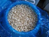 2015 new crop pickled garlic cloves, garlic in brine salted garlic cloves Garlic pickles