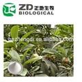 nombre científico de la hierba china folio eriobotryae extracto