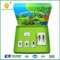 Amostra real do inseto- ciclo de vida de gafanhoto, crianças brinquedos educativos