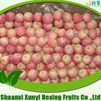 sell Fresh Apple fruit of high quality and good price