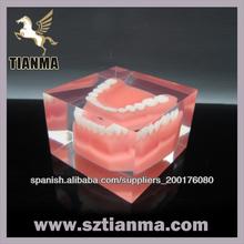 Dientes Dental modelo de fábrica de resina de regalo promocional