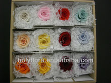 big size 9-10cm preserved rose head all colors