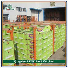 China 2015 Crop Garlic productions seeds
