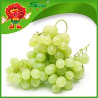 Thompson Seedless Sweet Grapes Fresh Green Grapes