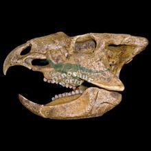 Resin Skull for Animal Plastic Skull Buyers