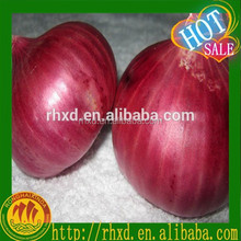 Red onion - Medium size- 50 mm size