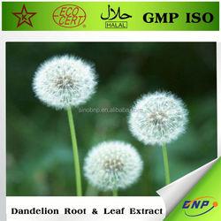 best price dandelion extract in herbal extract