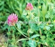 Red Clover Extract 8%, 20%, 40% Isoflavones(Top Quality), Specialize in Botanical Extracts