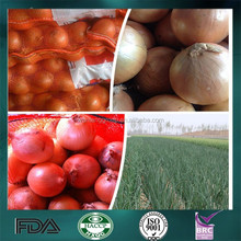 fresh onion prices in China