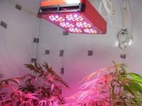 led grow light 2015 High Quality 450W 6000Lumens CE&ROSH Approved Shanghai LED Light supplier