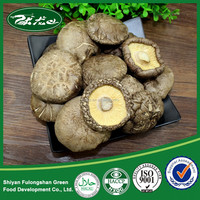Professional Chinese Wholesale Mushroom Distributors