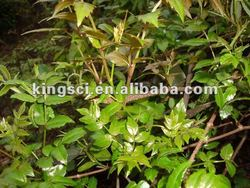 Clearing heat and dampness Vine tea Extract 98% Dihydromyricetin