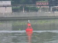 Solar Powered Light Buoys