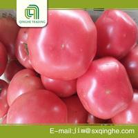 top grading china big tomato