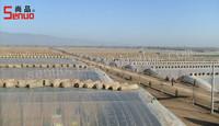 Transparent Roof Fiberglass Roof Tile for Greenhouse