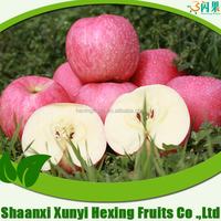 GRADE A fresh big red honey fuji apple supplier for sale