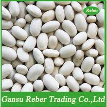 Japanese White Kidney Beans
