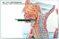 Товары для изучения медицины cmam] & , & , 190 ,  CMAM-Brain 1