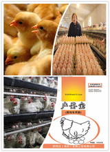 new coming feed additive for layer chicken to avoid diarrhea and salmonella