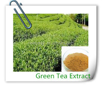 100% Pure Natural Green Tea,Green tea powder,Green Tea Extract